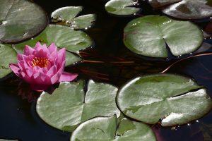Fiore foto di Andrea Priori